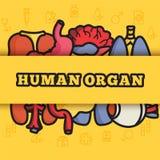 Set flat human organs icons illustration concept. Stock Photos