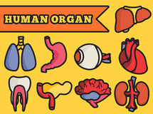 Set flat human organs icons illustration concept. Stock Photography