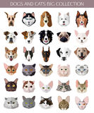 Set of flat popular Breeds of Cats and Dogs icons Stock Images