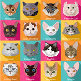 Set of flat popular breeds of cats icons. Vector illustration stock illustration