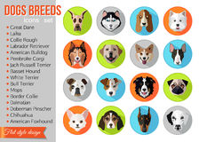 Set of flat popular breeds of dogs icons Royalty Free Stock Photo