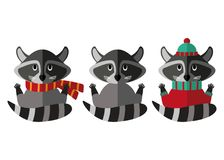 Set of flat raccoon icons, with snout, paws, tail, sweater and scarf. Royalty Free Stock Photography