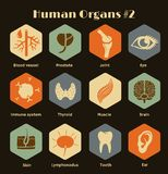 Set of flat retro icons human organs and systems Royalty Free Stock Photography