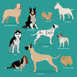 Set of flat sitting or walking cute cartoon dogs. Popular breeds/ Labrador Retriever, Chihuahua, Border Collie, Bull Terrier, Laika, Dalmatian, Jack Russell stock illustration