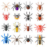 Set of flat spiders cartoon colored icons vector illustration  on white background. Stock Image