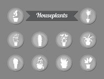 Set of flat vector icons. House plants.Illustration Royalty Free Stock Image