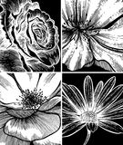 Set of floral backgrounds, hand drawing. Stock Photo