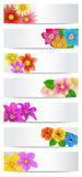 Set of floral banners. Royalty Free Stock Photo