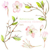 A set with the floral decorative elements in the form of the watercolor blooming flowers, leaves and branches with the buds for a. A set with the isolated floral Stock Photography