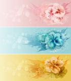 Set Of Floral Design Stock Photos