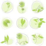 Set of floral design elements. Vector set of floral design elements Royalty Free Stock Photography