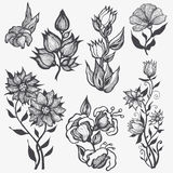 Set floral design elements Stock Image