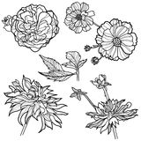 Set of floral design elements. (from my big Flower-set collection Royalty Free Stock Image