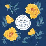 Set of floral design elements. Vector flower collection on a dark blue background Stock Photography