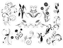 Set of floral elements. Isolate decorative elements for design Stock Image