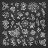 Set of floral elements. Stock Photography