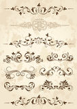 Set of floral elements for design. Old grunge paper with floral elements, illustration Royalty Free Stock Photo