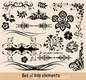 Set of floral elements for design,  Stock Photo