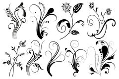 Set of floral elements for design,  Stock Images