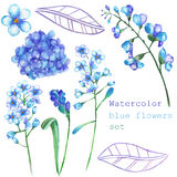A set with the floral elements in the form of watercolor blue flowers, blooming flowers (Hydrangea, Myosotis) for a decoration Stock Photo