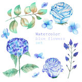A set with the floral elements in the form of watercolor blue flowers and leaves Stock Photography