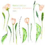 A set with the floral elements in the form of watercolor spring pink flower Stock Photos