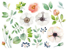 Set of floral elements on white background Royalty Free Stock Image