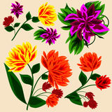 Set of floral elements Royalty Free Stock Image