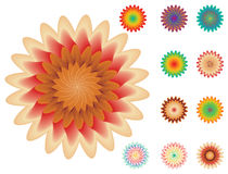 Set of floral elements for your design on white Royalty Free Stock Image