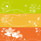 Set of floral flower background Stock Photos