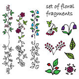 Set of floral fragments. Vector illustration Stock Photos