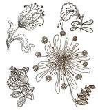 Set of floral graphic design elements for coloring book Royalty Free Stock Images