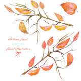 A set, floral illustration with the isolated watercolor red autumn leaves on the branches Stock Images