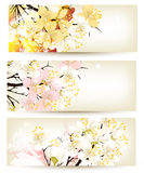 Collection of flower vector backgrounds Royalty Free Stock Images