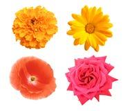 Set of flower Stock Photo