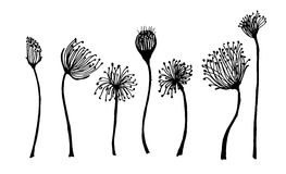 Set of flower doodles flower Royalty Free Stock Photo