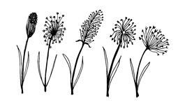 Set of flower doodles flower Royalty Free Stock Photography