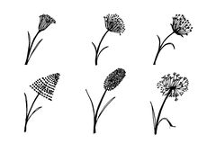 Set of flower doodles flower Stock Image