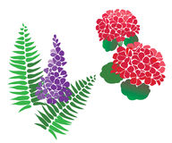 Set of Flower and fern Vectors. Vector set of Geranium and Wisteria flowers with fern - can be used for stenciling, wall art, decal, painting, cards, invites etc Royalty Free Stock Photography