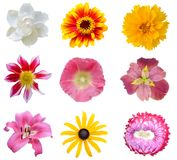 set of Flower heads Royalty Free Stock Images