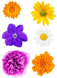 Set of flower heads isolated on white background Stock Images