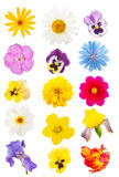 Set of flower heads Stock Photography