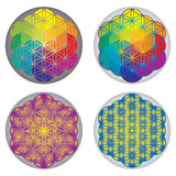 Set of Flower of Life Symbols - Rainbow Colors Royalty Free Stock Photos