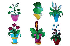 Set of flower in a pot Stock Images