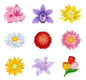 Set flower Royalty Free Stock Photography