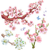Set of flowering branches Royalty Free Stock Images