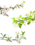 Set of flowering plant Stock Image