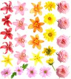 Set Flowers Royalty Free Stock Photos