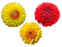 Set of flowers. Set of isolated flowers isolated in white background royalty free stock photos