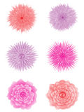Set of flowers. Royalty Free Stock Photography